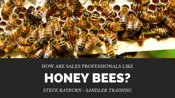 How Are Sales Professionals Like Honey Bees?